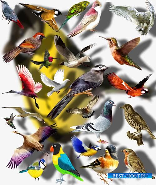 Коллекция Png клипартов - Цветные птицы