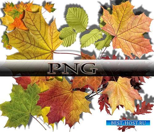 Коллекция Png клип-артов - Осенние листья