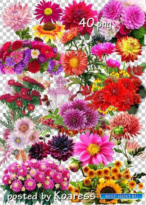 Подборка клипарта на прозрачном фоне для дизайна - Осенние цветы, букеты, композиции с цветами