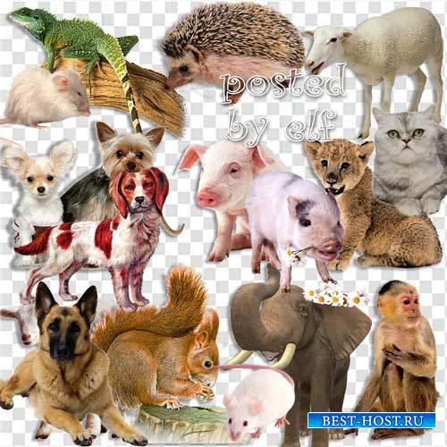 Подборка клипарта png – Разные животные