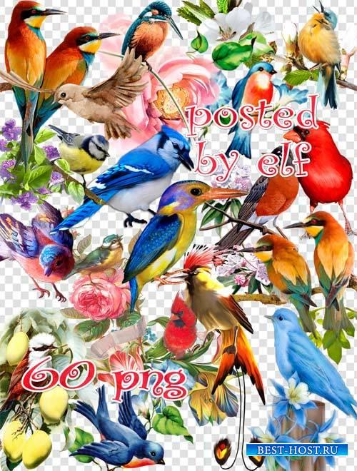 Птицы к югу улетают - клипарт в PNG 2