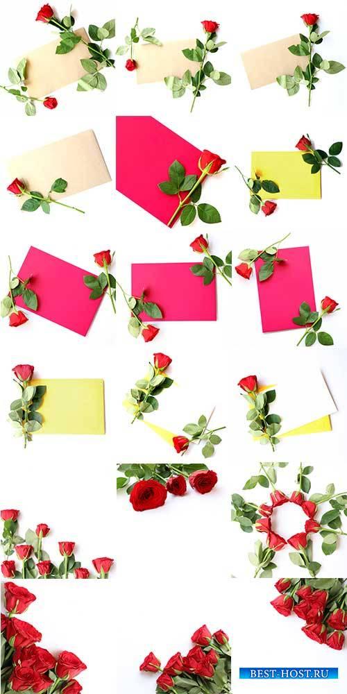 Фоны с красными розами / Backgrounds with red roses