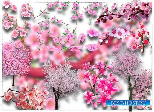 Растровые клипарты - Японская сакура