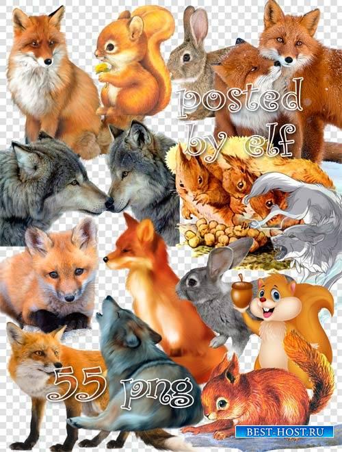 Клипарт png для фотошопа – Разные животные
