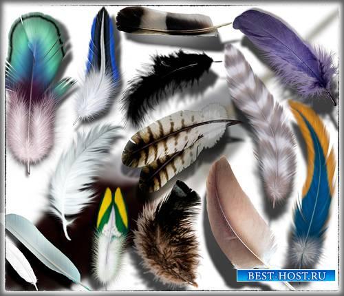 Клип-арты на прозрачном фоне - Перья разных птиц