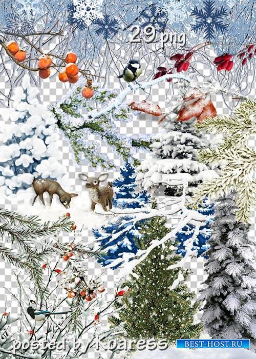 Клипарт png без фона - Зимние деревья, кусты, ветки и другие элементы пейзажа