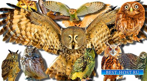 Клип-арты для фотошопа - Лесные совы