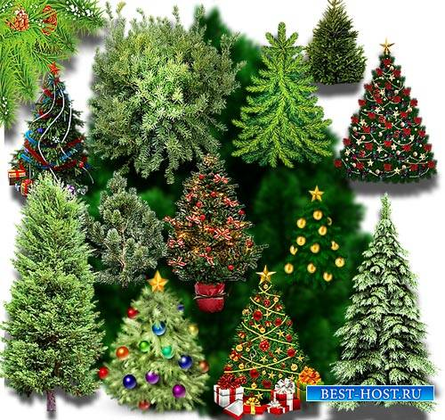 Png на прозрачном фоне - Новогодние елки