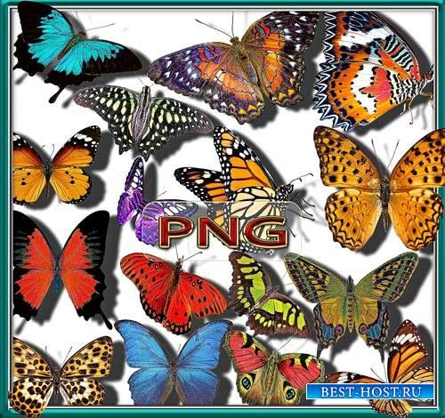 Клипарты для фотошопа - Бабочки