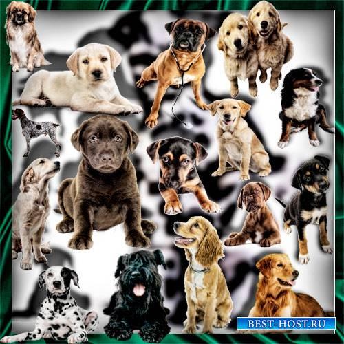 Прозрачные клипарты для фотошопа - Породистые собаки
