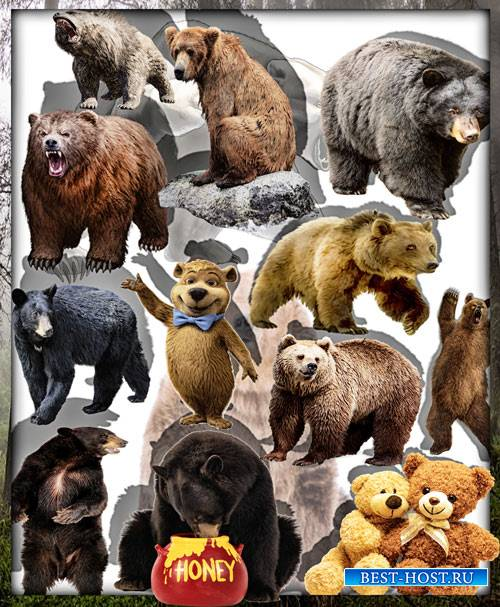 Клипарты для фотошопа - Грозные медведи
