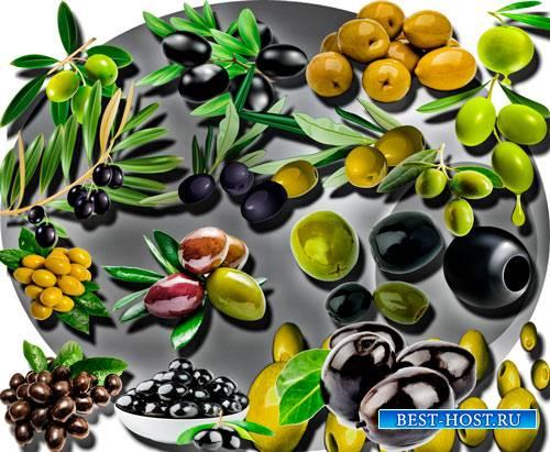 Растровые клипарты - Черные и зеленые оливки