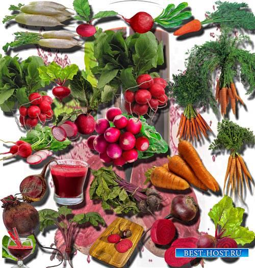 Качественные клип-арты - Буряк, морковь и редис