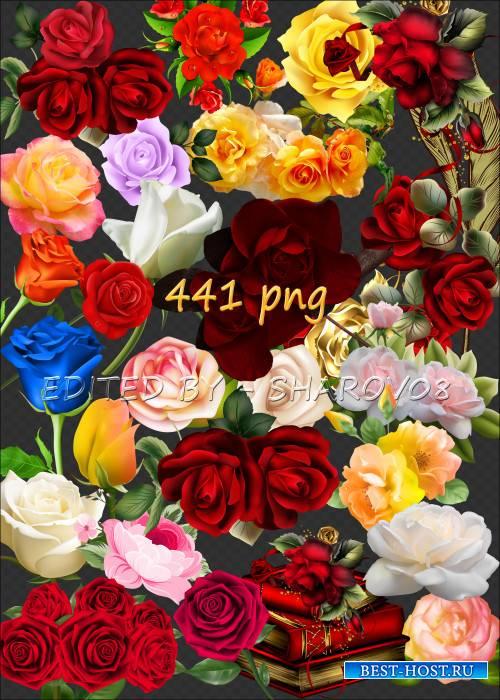 Клипарт на прозрачном фоне - 500 неповторимых оттенков роз