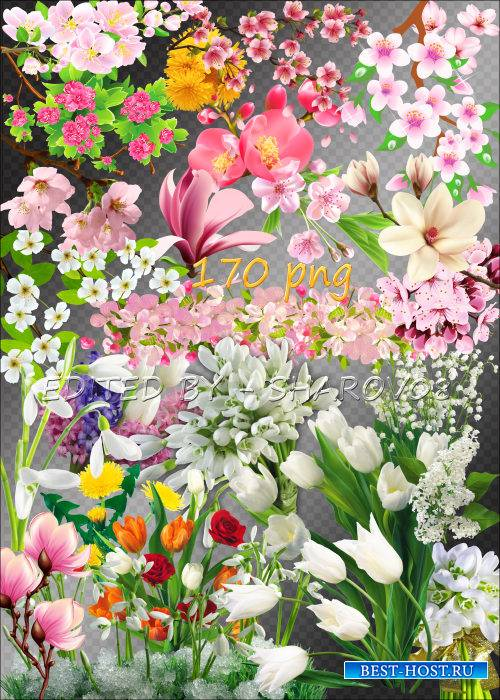 Клипарт на прозрачном фоне - Весеннее цветение