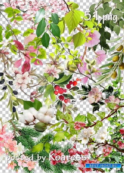 Tree branches, flowers, leaves png - Ветки деревьев, цветы, листья на прозрачном фоне