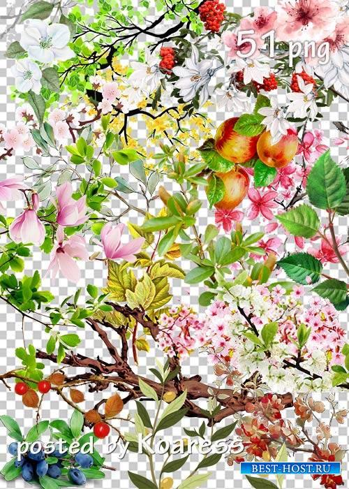 Tree branches, flowers, leaves png part 2 - Ветки деревьев, цветы, листья в png часть 2