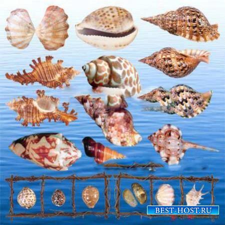 Клипарты без фона - Ракушки моря