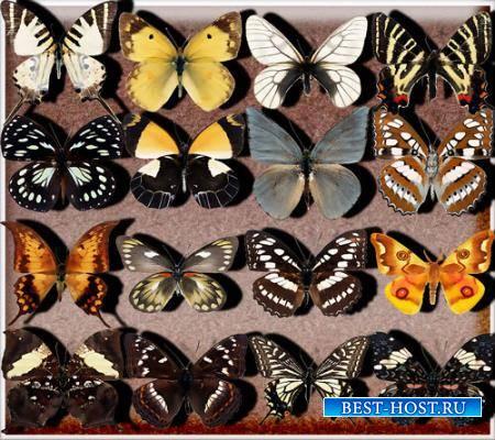 Png без фона - Бабочки разных видов