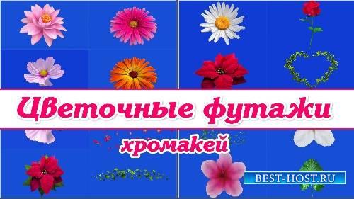 Комплект футажей - футажи цветочные хромакей