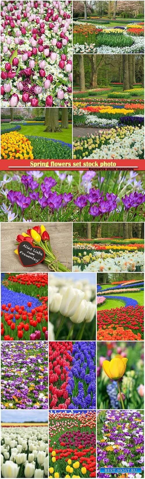 Spring flowers set stock photo