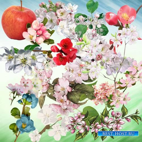 Ветки цветущих деревьев на прозрачном фоне