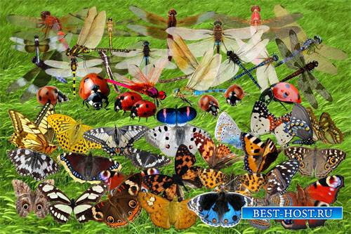 Клипарт Летние насекомые