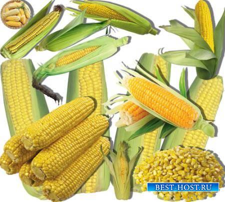 Png клипарты - Сладкая кукуруза