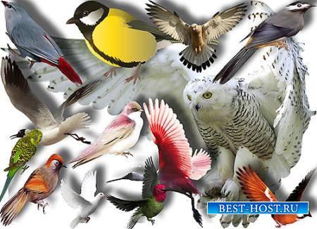 Клипарты для фотошопа - Птицы