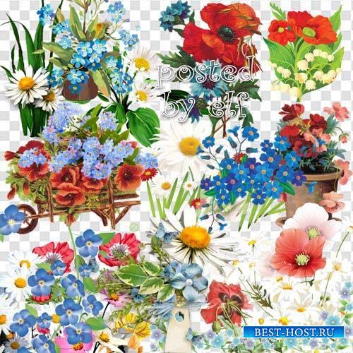 Полевые цветы - Незабудки, маки, ромашки в PNG
