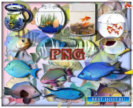 Клипарты для фотошопа - Рыбы океанов