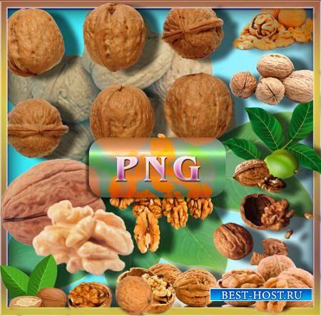 Png клипарты - Грецкие орехи