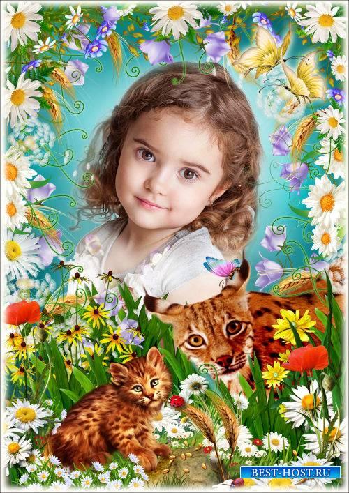 Рамка для Фотошопа - Милая ромашка