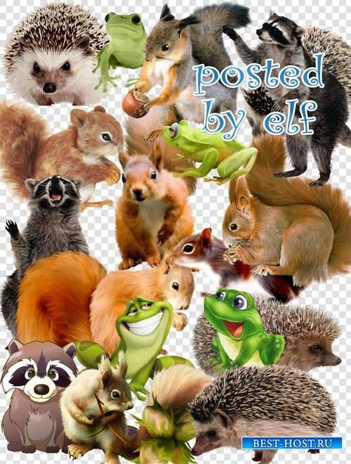 PNG клипарт - Белки, ежи, еноты , лягушки