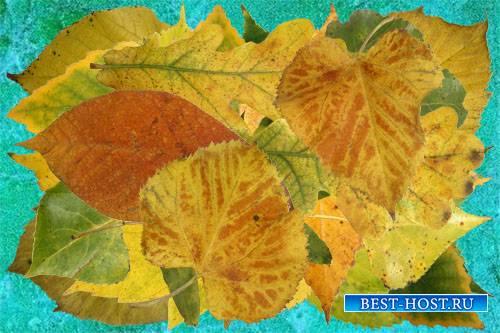 Клипарт Осенние листья лиственных деревьев часть первая