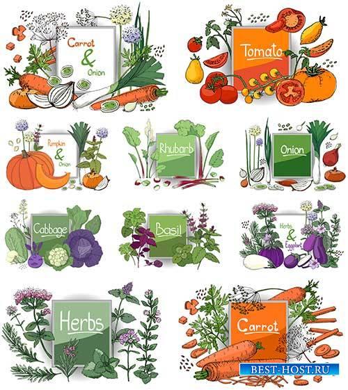 Овощи - Векторный клипарт / Vegetables - Vector Graphics