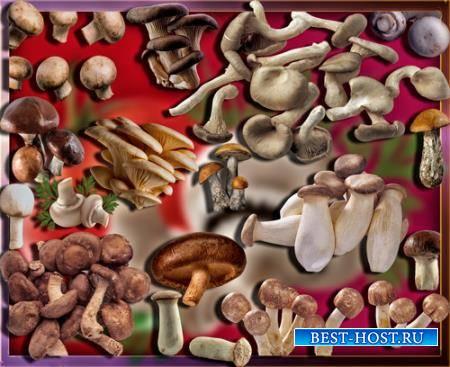 Клипарты на прозрачном фоне - Осенние грибы
