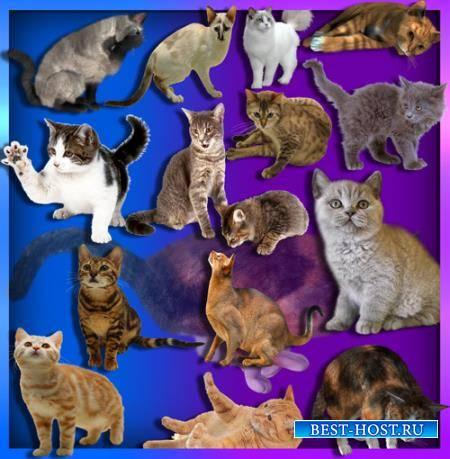 Клипарты для фотошопа - Коты и кошки