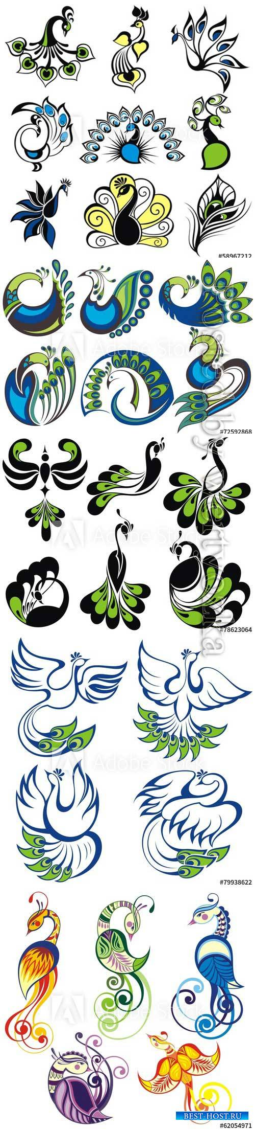 Birds icons, peacock vector birds