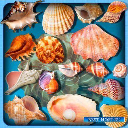 Png прозрачный фон - Ракушки моря