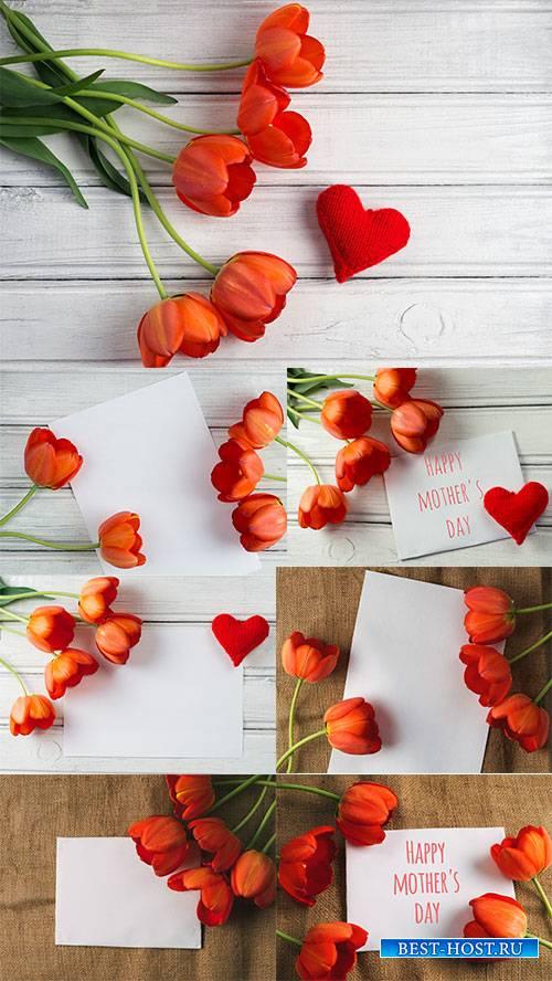 Фоны с тюльпанами - Растровый клипарт