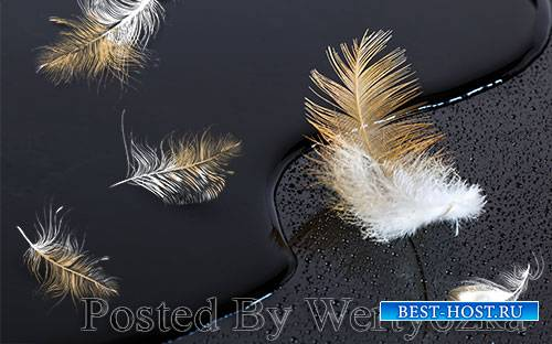 3D models modern golden feathers black tv background wall