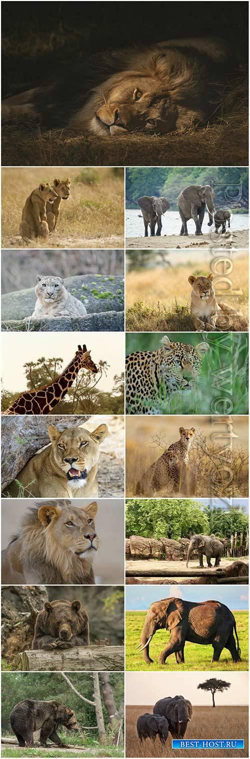 Animals lion, giraffe, elephant, bear stock photo set