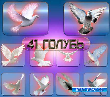 Png клипарты - Голуби и голубки