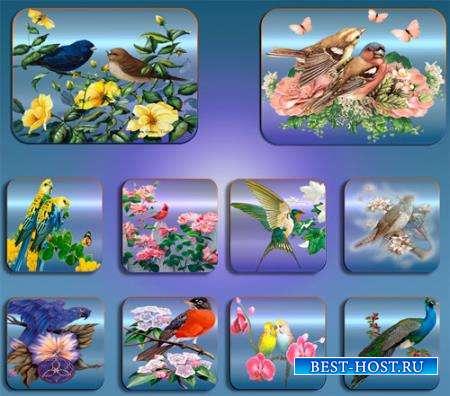 Png клипарты - Птицы в цветах