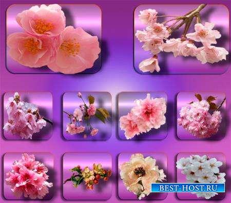 Клипарты для фотошопа - Цветы в саду