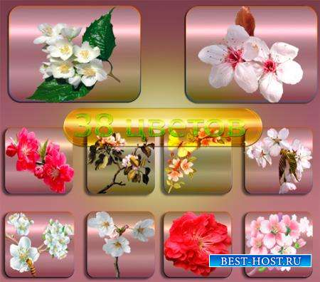 Png клипарты без фона - Светущий сад