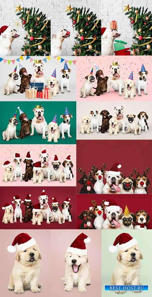 Собаки в новогодних шапках - Растровый клипарт