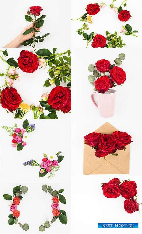 Розы на белом фоне - Растровый клипарт
