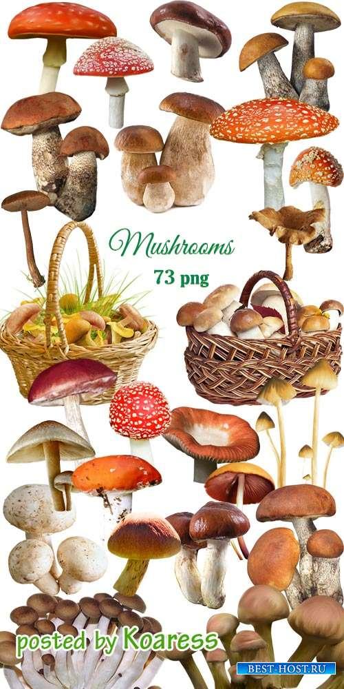 Клипарт png Лесные грибы -  Png clipart  Mushrooms